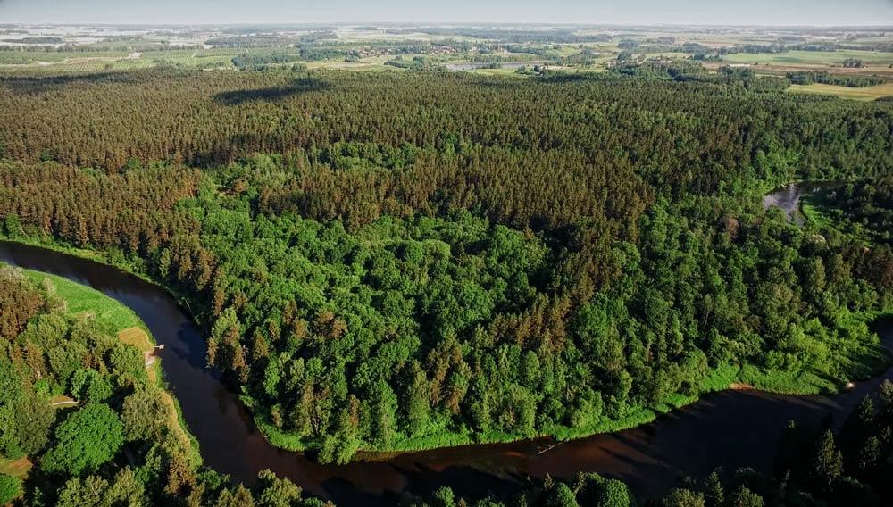 miško kaina, miško vertinimas